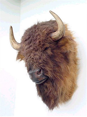 Bison Head Wall Mount